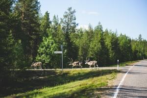 #MBPolarSun - GLE Und GLE Coupé Road Trip - BTS #MBPolarSun - GLE and GLE Coupé road trip - BTS